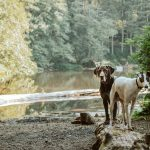 The Ulti-Mutt Experience, Crowne Plaza Edinburgh – Royal Terrace Launches Tailored Doggy Getaways